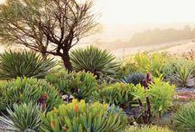 Gardens, plants & outdoors