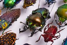 Bugs and Taxidermy