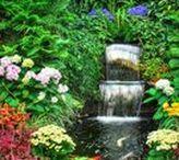 Diseño y decoración de jardines / El diseño y decoración de jardines son áreas especialmente diseñadas con plantas con el propósito de dar placer estético. Los diseños de jardinería a menudo incluyen plantas ornamentales en sus diseños. Algunos jardines botánicos  también incluyen secciones ornamentales que no tienen que ver con el objetivo de preservar especímenes. El diseño de jardines ornamentales es increíblemente variado, dependiendo del clima, las plantas que lo componen y la naturaleza de la arquitectura que lo rodea.