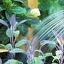 Riego / El riego consiste en aportar agua a los cultivos por medio del suelo para satisfacer sus necesidades hídricas que no fueron cubiertos mediante la precipitación. Se utiliza en la agricultura y en jardinería.