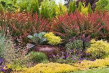 Canteros / Se trata de espacios con formas rectas, curvas o combinadas donde se agrupan las plantas. En ellos se cultivan plantas ornamentales que se eligen por las hojas, las flores, la forma.