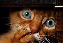 Imagination With Pets / Austin Pet Sitter, Moxie's Pet Service  www.moxiespetservice.com / by MOXIEatx