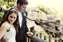 Zoo Wedding Ideas / by Los Angeles Zoo