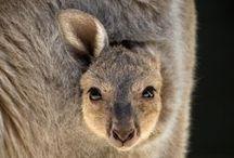 Marsupials / by Los Angeles Zoo