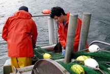 Know Your Fishermen / The seafood producers of ilovebluesea.com / by i love blue sea
