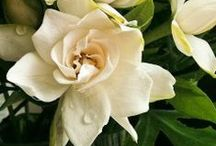 Flower Arrangements and wedding bouquets / by Leela Southworth
