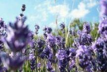 Petit Moment ♥ Lavender / Petit Moment ♥ Lovely Lavender www.petitmoment.nl