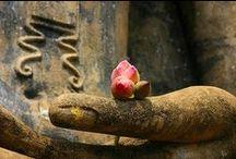 Buddha &Co