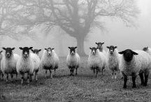 Petit Moment ♥ Animals / Petit Moment ♥ Black & White Photography Animals  www.petitmoment.nl