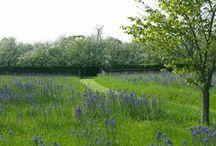 Drakängen/Garden & meadow / Meadows and garden. Inspiration to create a meadow garden in southeastern Sweden.