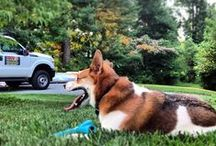 For our Furry Friends / Only the best for our four legged family members. Fun, relaxation, and quality time in the yard with our furry friends. Life doesn't get any better than this.