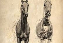 Animal - horse