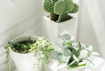 Terrariums, Succulents & Cacti