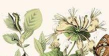 botanicals & nature studies