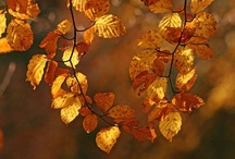 Fall for autumn / The colours of autumn in England's New Forest