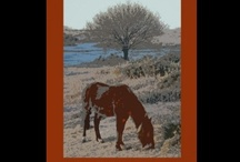 Poster sights / Posters created by New Forest Pics