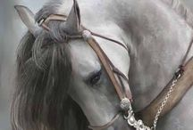 H o r s e s / Horses are beautiful, noble, exquisite.