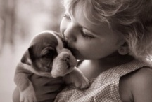 Puppy Love / Puppies, dogs, big small I love them all.