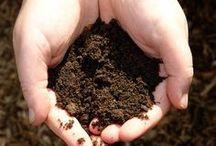 Soil Fertility and Health