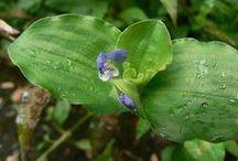 Noxious and Invasive Weeds
