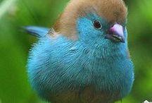 Oiseaux/Birds