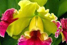 Bloemen / Schilderijen en tuinen