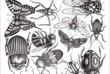 Insectes/Insects