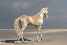 HORSES / by Marcela Garza Alejandro