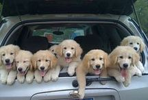 Puppies / Lieve, leuke en, grappige prentjes van jonge hondjes
