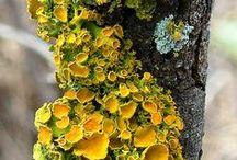 Lichen and mos