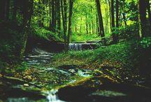 Natuʀe Eɴcʜaɴteʀesse / Les merveilles de nôtre monde naturel.