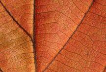 Oʀaɴɢe Automɴaℓ / Dégradés d'oranges... Orange apaisant, orange doux, orange chaleureux... Je trouve inspiration, beauté et créativité parmi le thème des couleurs et tant d'autres choses. Le orange est définitivement une de mes couleurs favorites =} sûrement ma préférée au même titre que le gris.