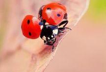 Daɴs ℓ'Heʀbe / Insectes, arachnides, gastéropodes & autres arthropodes... Une plongée dans le monde merveilleux de toutes ces créatures fascinantes que j'aime profondément & que je vénère.