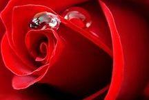 Αγαπη το νοημα της ζωης-LOVE  the meaning of life