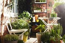 Balcony Gardening / Ideas for balconies and small spaces.