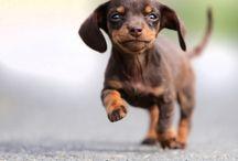 puppies. / Puppies