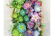 Flores, plantitas.