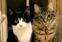 CATS - REAL / by Debra Slotkin Shulman