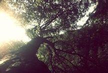 Tree... / Trees, I just love trees...