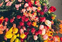 Flowers,Plants,Garden