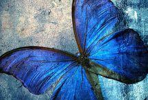 Bees & butterflies