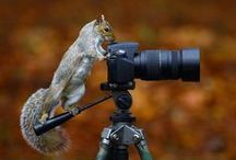 Awesome Photography in the World / Share Awesome Photography in the World to you!!!