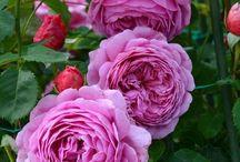 -In my garden grows ...