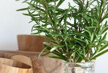 -Propagate plants-