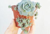 -Succulents-