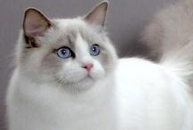 CATS / by Kristy Baker