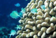 Marine biology / by Lori Schwendeman