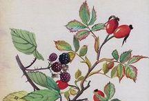 KUNSTMALEREI // graphic & illustration / botanische Zeichnungen, Flora & Fauna, Illustration