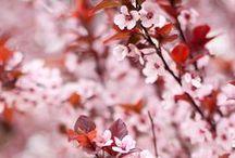 Le jardin de Léa / Le Laboratoire Léa Nature, c'est un jardin fleuri et parfumé, frais et raffiné pour des recettes de beauté biologiques aux promesses cosmétiques reconnues.