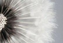 Pure / Quoi de mieux qu'une sensation de fraîcheur et de pureté ?   Retrouvez la pureté bio thermale pour la peau dans la gamme Pure d'EAU THERMALE JONZAC.